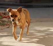 Hund; ett efternamn arkivbild