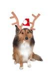 hund för 2 julhjortar Arkivbild