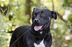 Hund för avel för kort taxbulldogg blandad Royaltyfria Foton
