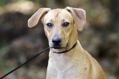 Hund för avel för solbränd hundbyracka blandad Royaltyfria Bilder