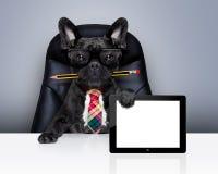 Hund för framstickande för kontorsarbetare arkivbilder