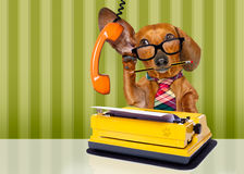 Hund för framstickande för kontorsarbetare royaltyfria foton