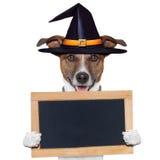 Hund för Halloween placeholderbaner Royaltyfri Foto