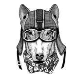 HUND för hjälmen för motorcykel för t-skjorta design den bärande, flygarehjälmillustration för t-skjortan, lapp, logo, emblem, em royaltyfri bild
