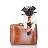 Hund för kontorsarbetare royaltyfri foto
