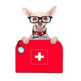 Hund för medicinsk doktor arkivfoton