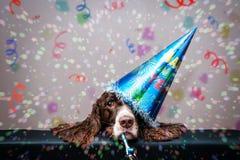 Hund för nytt år arkivbild