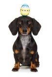 Hund för påskkanin med ägget Arkivfoto