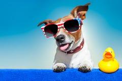 Hund för sommarferie Arkivfoton