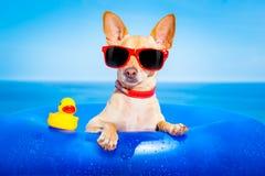 Hund för sommarferie Arkivbild