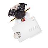 Hund för stolpe för postleverans Arkivfoto