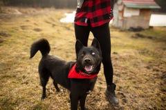 Hund för tysk herde Brovko Vivchar som går i fält med hans husmor royaltyfri foto