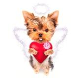 Hund för vänvalentinvalp med en röd hjärta fotografering för bildbyråer