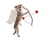 Hund för valentindagkupidon Arkivfoto