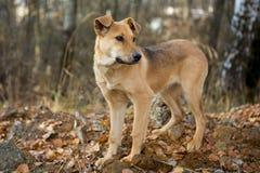 Hund für einen Weg im Wald Stockbilder