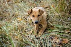 Hund für einen Weg im Wald Stockfotos