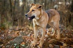 Hund für einen Weg im Wald Stockfotografie
