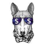 HUND für tragende Gläser T-Shirt Designs mit Dollarzeichen Illustration mit wildem Tier für T-Shirt, Tätowierungsskizze, Flecken Stockfotos