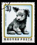 Hund (familiaris för Canislupus), ung djurserie, circa 1974 Fotografering för Bildbyråer