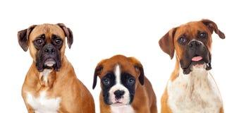 Hund- familj Arkivbild