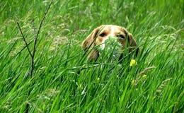 Hund am Feiertag im Hinterhalt am Häuschen stockfoto
