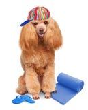 Hund. Feiertage in Meer Stockbilder