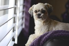 Hund am Fenster lizenzfreies stockbild