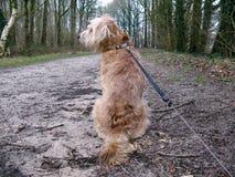Hund in forrest lizenzfreie stockfotos