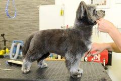 Hund- frisör i en skönhetklinik med hunden Arkivfoton