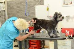 Hund- frisör i en skönhetklinik med hunden Arkivbild