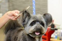 Hund- frisör i en skönhetklinik med hunden Arkivbilder