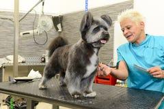 Hund- frisör i en skönhetklinik med hunden Royaltyfria Foton