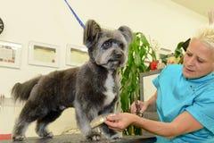 Hund- frisör i en skönhetklinik med hunden Royaltyfri Fotografi