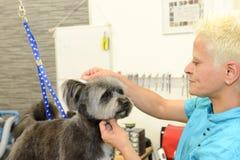 Hund- frisör i en skönhetklinik med hunden Arkivfoto