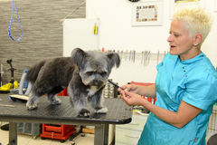 Hund- frisör i en skönhetklinik med hunden Royaltyfria Bilder