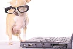 Hund gegangenes einfaches Geschäft Stockfoto