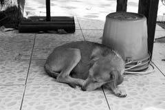 Hund geglaubtes kaltes Schlafen Stockfotografie