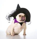 Hund gekleidet als Hexe Stockfoto