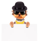 Hund gekleidet als Mafiagangster mit Fahne Lizenzfreies Stockbild