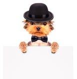 Hund gekleidet als Mafiagangster mit Fahne Stockbild