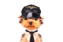 Hund gekleidet als Pilot Lizenzfreies Stockbild