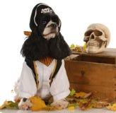 Hund gekleidet als Pirat lizenzfreie stockfotografie
