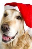 Hund gekleidet als Weihnachtsmann lizenzfreies stockbild