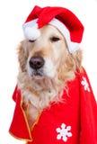 Hund gekleidet als Weihnachtsmann stockfotografie