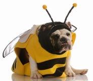 Hund gekleidet herauf als Biene Stockbild