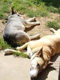 Hund gemischter Zuchtsonnenschein Stockfoto