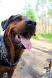 Hund genanntes Rik Lizenzfreie Stockfotografie