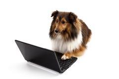 Hund genom att använda bärbara datorn royaltyfria bilder