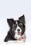 Hund glücklich, auf einer Diät zu sein Stockfotografie