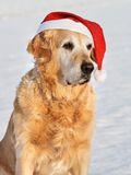 Hund - goldener Apportierhund als Sankt Klaus lizenzfreie stockbilder